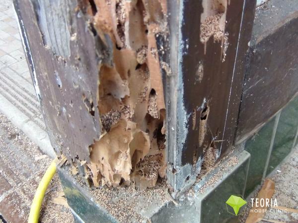 アメリカカンザイシロアリによる柱の被害