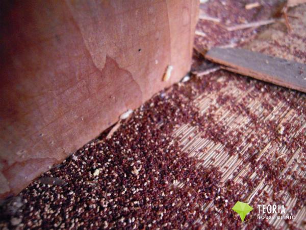 カンザイシロアリの糞