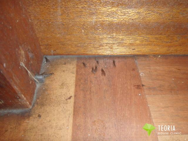 キッチンに羽アリが発生