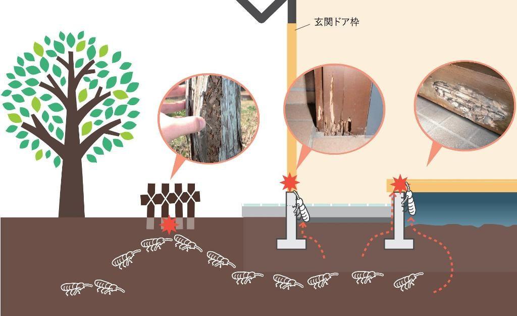 シロアリの生息環境